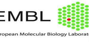 Bourses postdoctorales entièrement financées dans les laboratoires de l'EMBL en Allemagne.