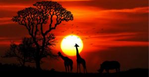 Fonds de conservation des espèces Mohamed bin Zayed 2019