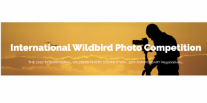 International Wildbird Photo Competition