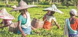 مسابقة لمشاريع إنتاج المحاصيل والأغذية وفرصة الفوز بجوائز نقدية من Syngenta لعام 2020