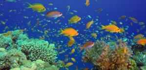 Khaled bin Sultan Foundation's Contest for School Students' Artworks on Conserving Coral Reefs 2020