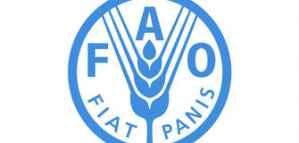 Opportunité de stage rémunéré au Bureau régional de la FAO pour le Proche-Orient et l'Afrique du Nord 2020