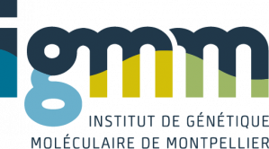 Post-doctorat en laboratoire de transcription et chromatine, Institut de Génétique Moléculaire de Montpellier