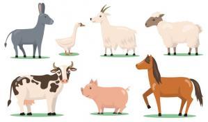 Sciences animales